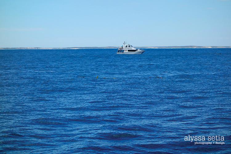AU, whaleshark15