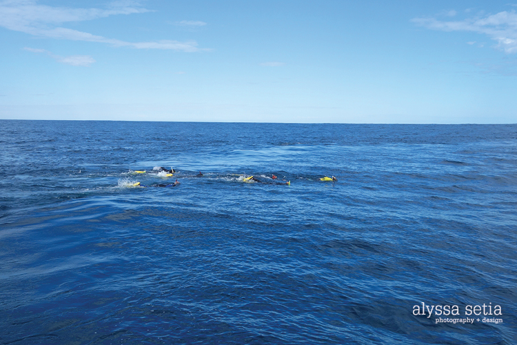 AU, whaleshark16