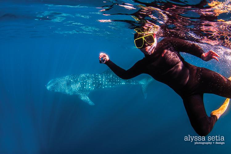 AU, whaleshark18