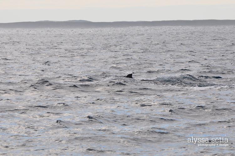 AU, whaleshark2