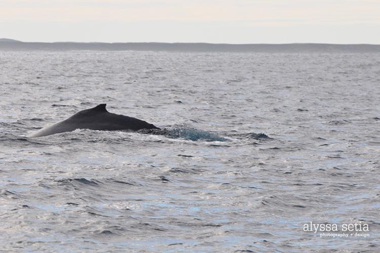 AU, whaleshark3
