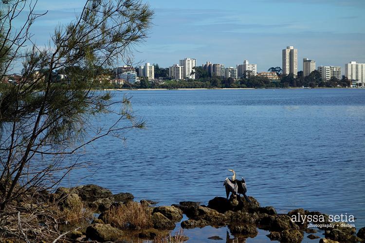 Perth flat cottesloe11